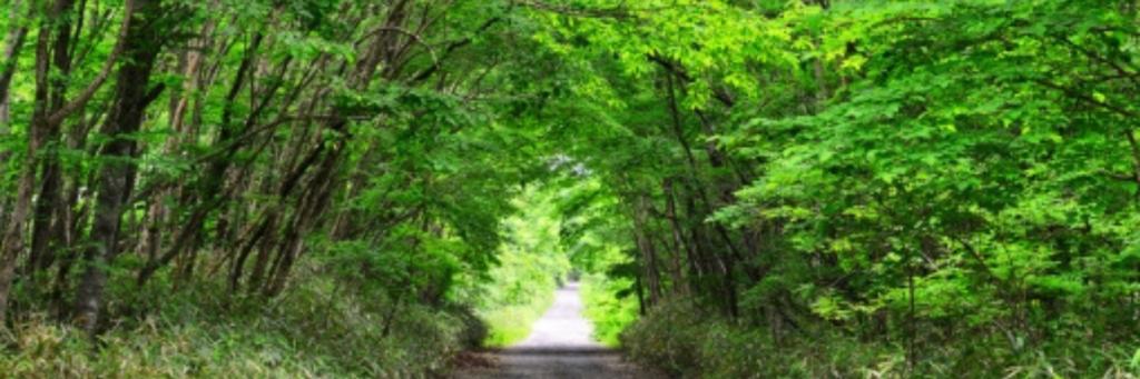 森|一般社団法人七草会 就労継続支援B型あらた 熊本県人吉市