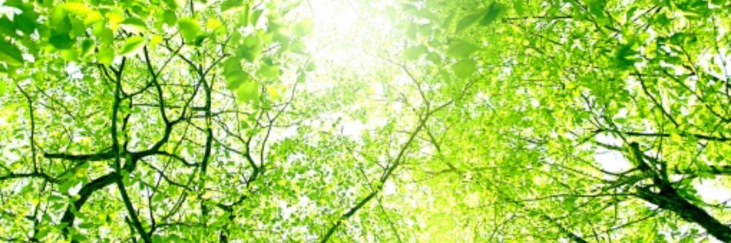 緑|一般社団法人七草会 就労継続支援B型あらた 熊本県人吉市